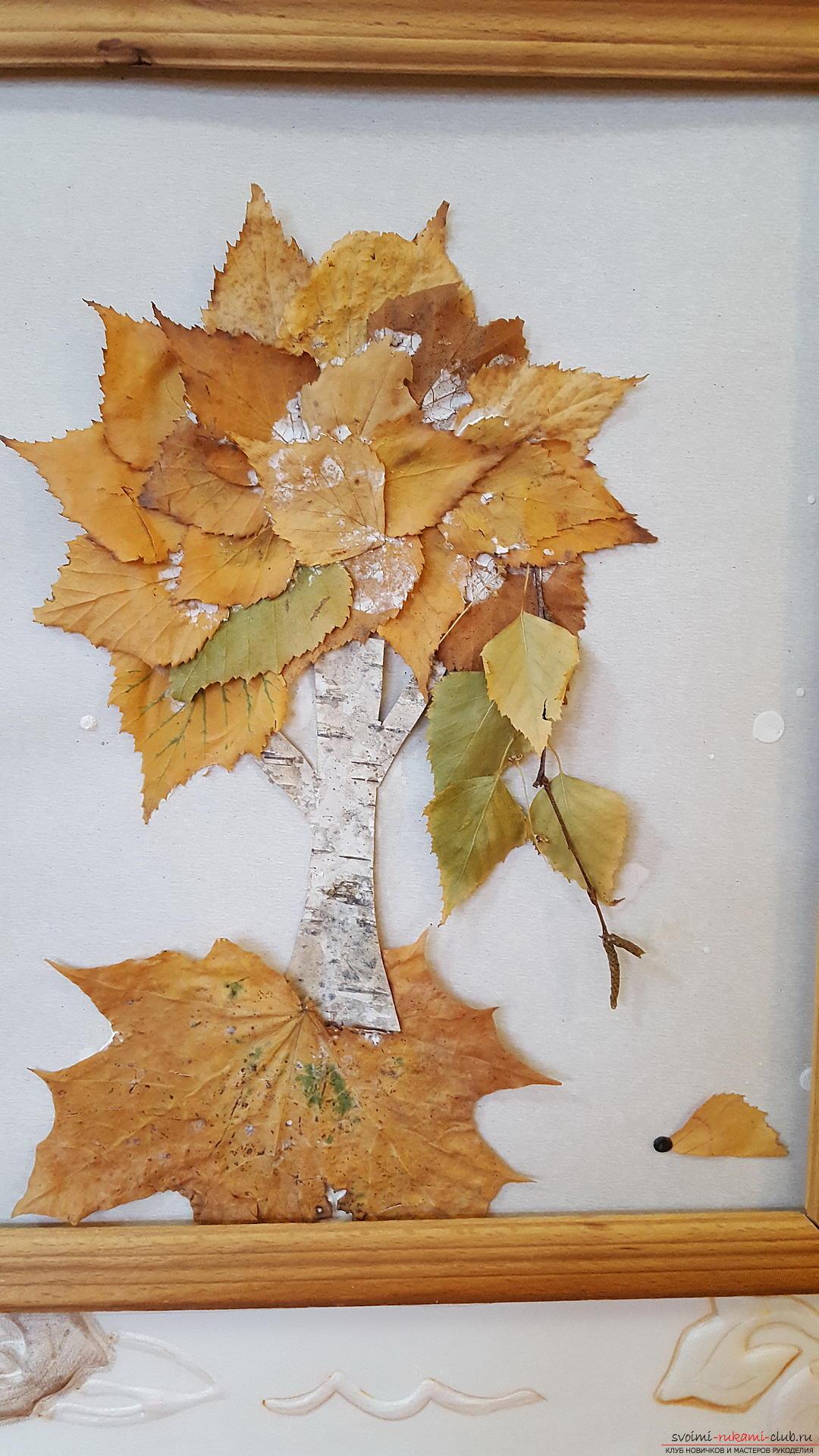 Оригинальный гербарий из листьев фото 102